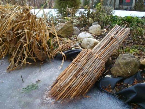 Камыш предотвратит намерзание толстого льда и даст рыбам кислород
